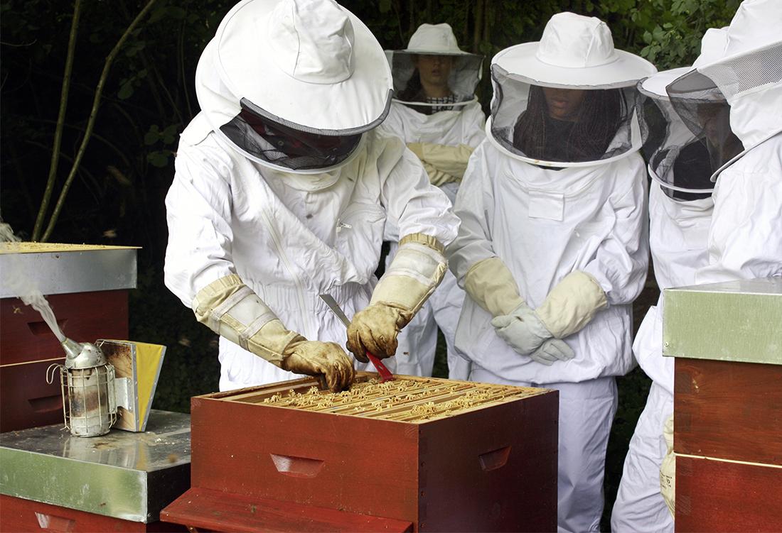 institut le rosey les abeilles ros ennes. Black Bedroom Furniture Sets. Home Design Ideas